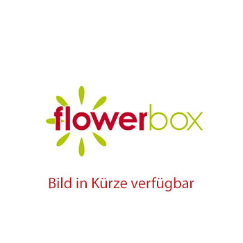 Paradiesvogelblume mit Kunstblüte - Strelitzia - Höhe ca. 35-40 cm, Topf-Ø 13 cm